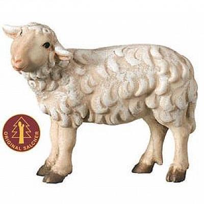 Schaf stehend linksschauend